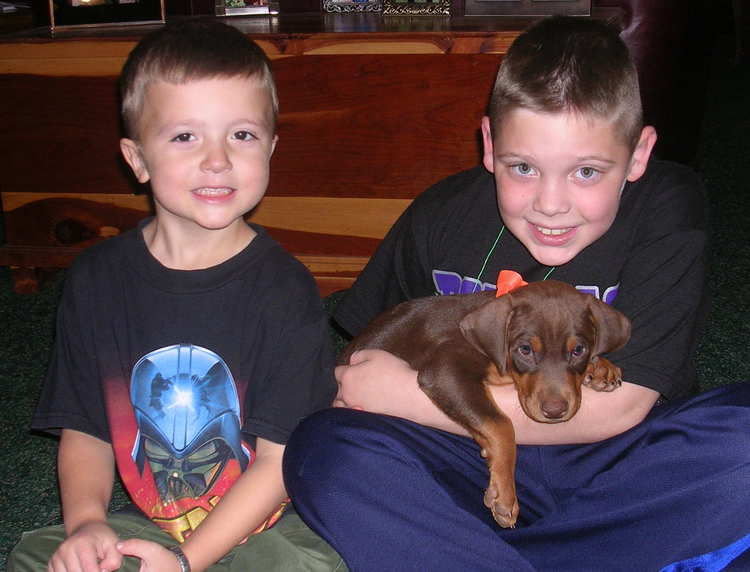 red rust male doberman puppy with children