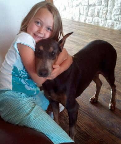 blue and rust female doberman with little girl
