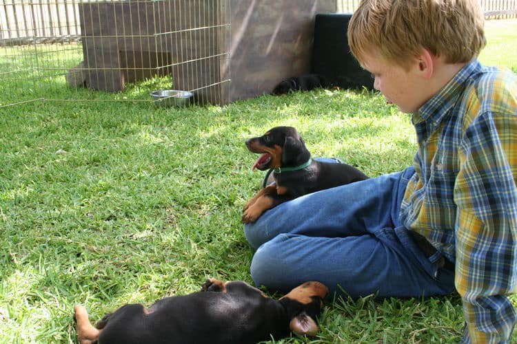 Buster family with Dobermans