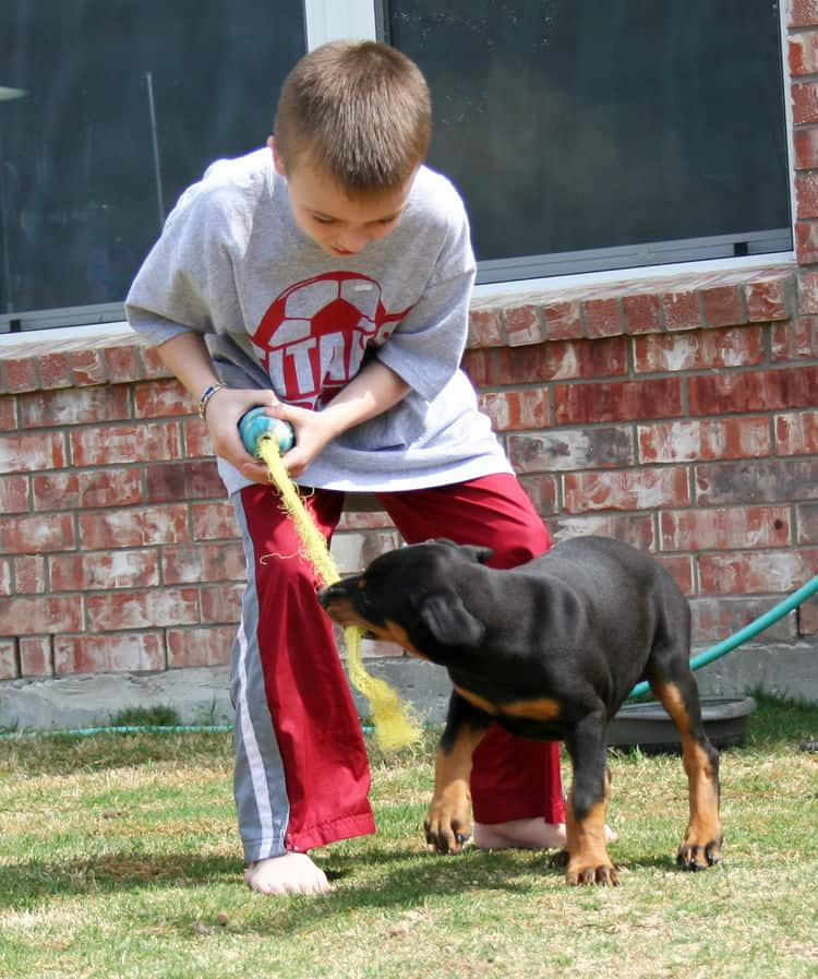 doberman puppy children