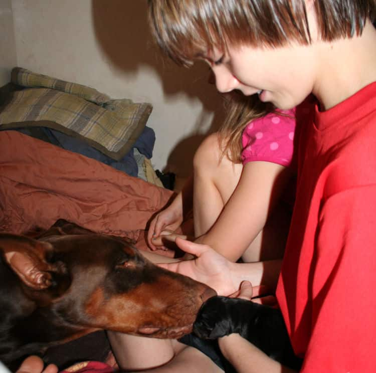 children with doberman puppies