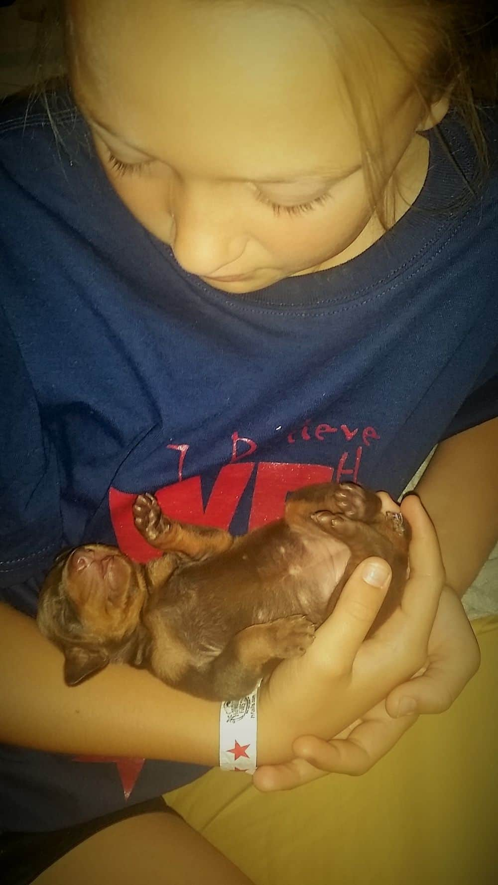 6 day old red and rust, black and rust doberman puppies