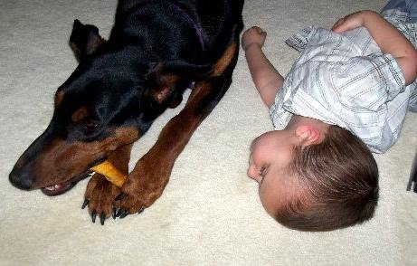 Doberman female with child